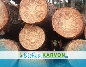 Pine Log